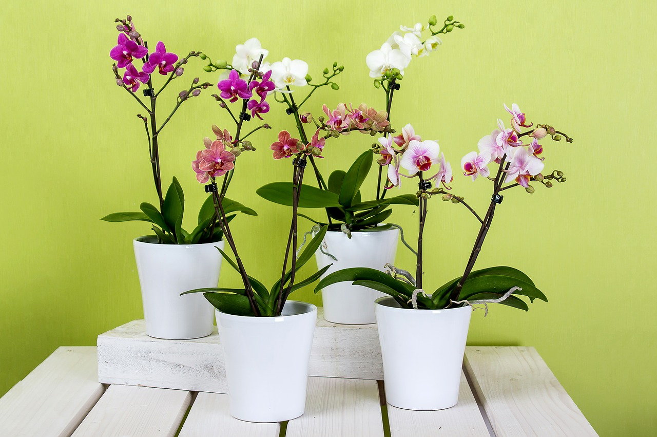 Array of pink and white orchids