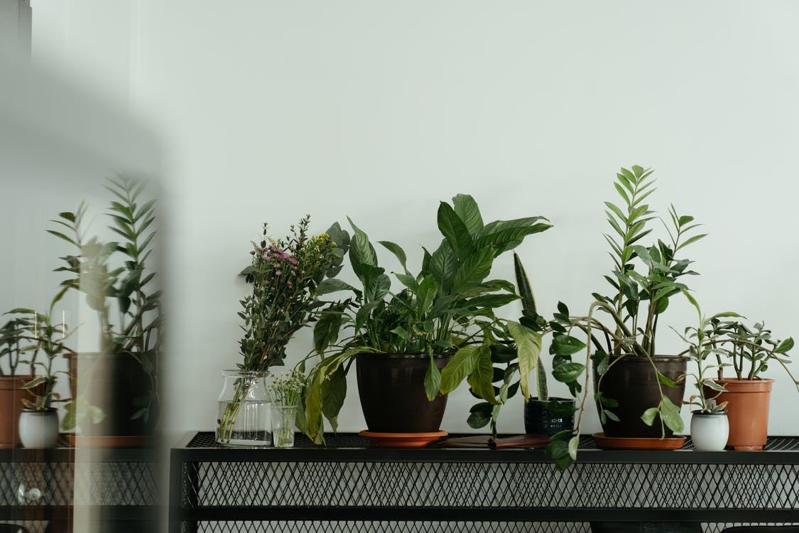 A row of indoor plants on a bench