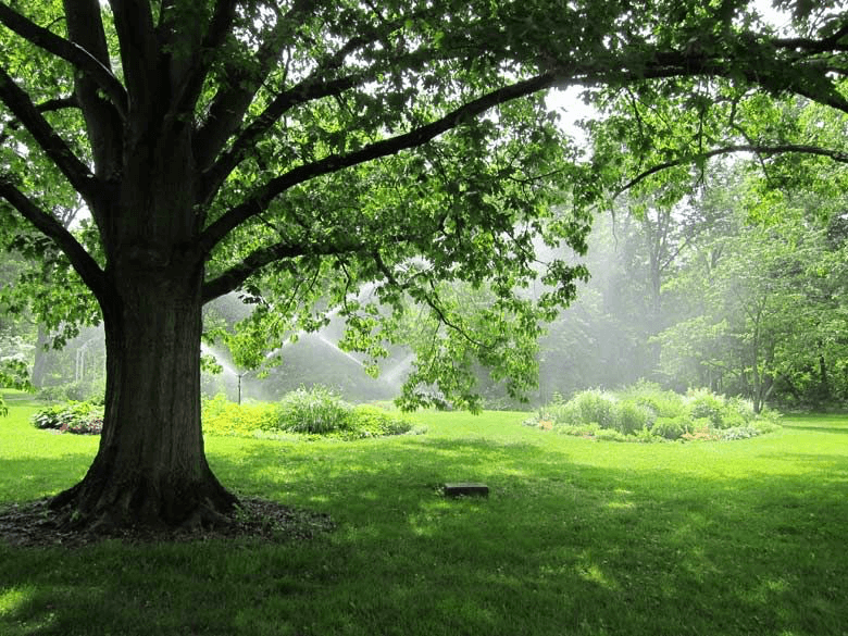 A sunny day with green grass and a tall tree.