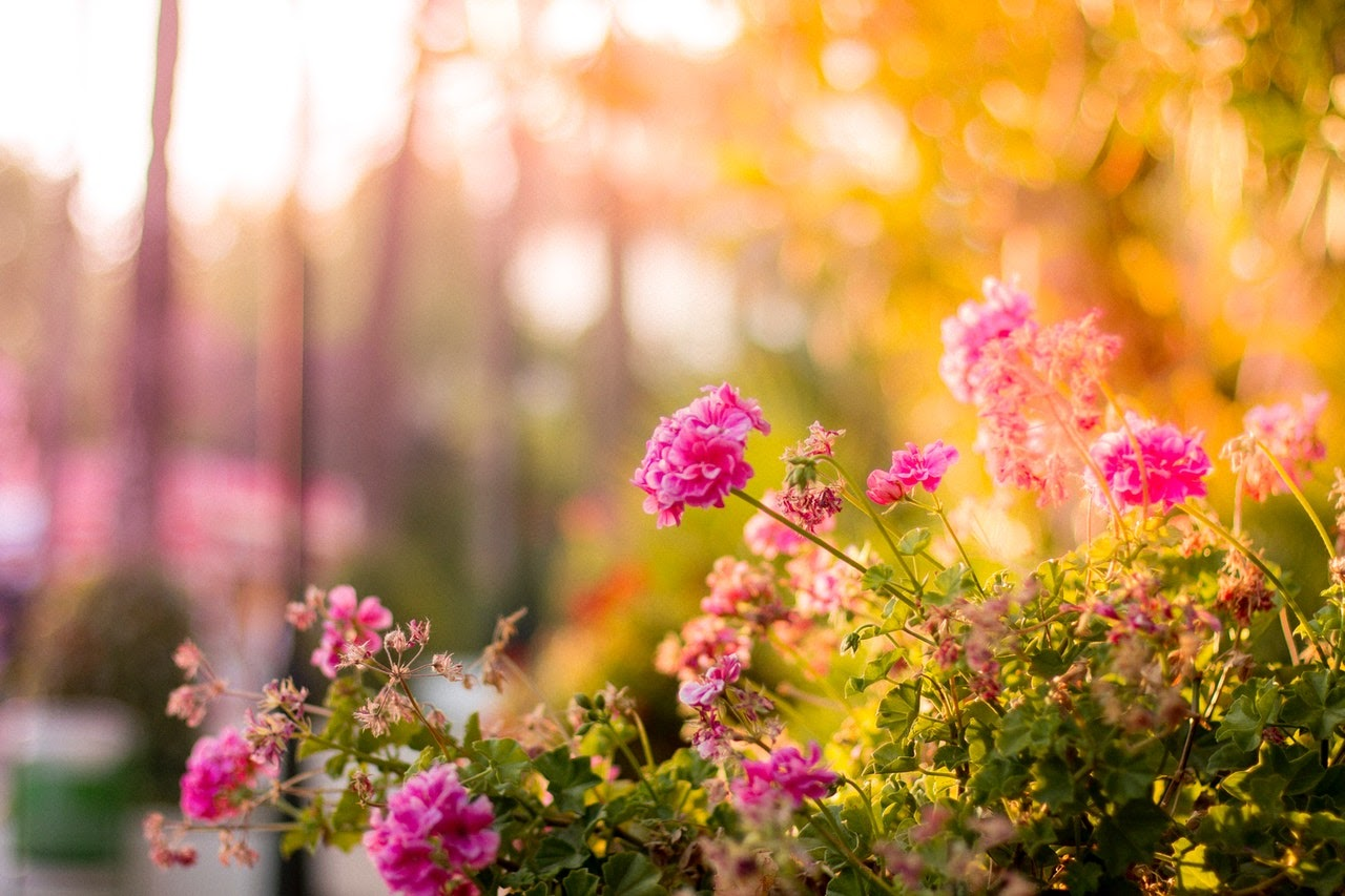 perennial flowers in the sunlight