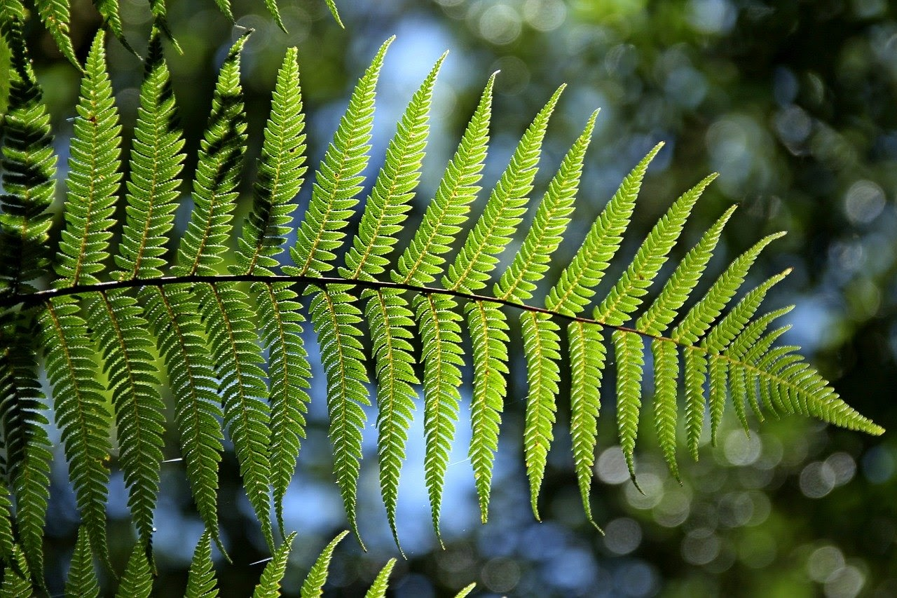 a fern frond held up to the light