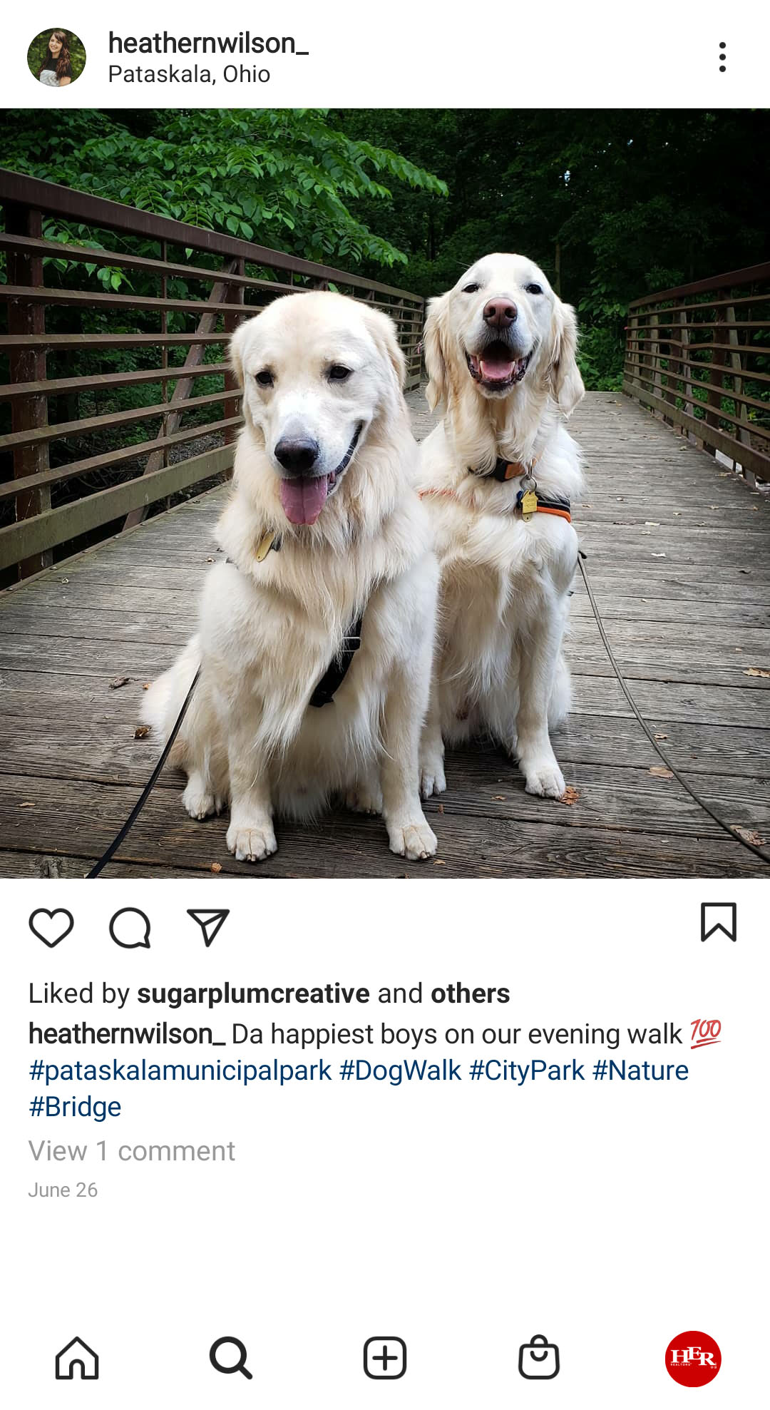 Two whitw Dogs