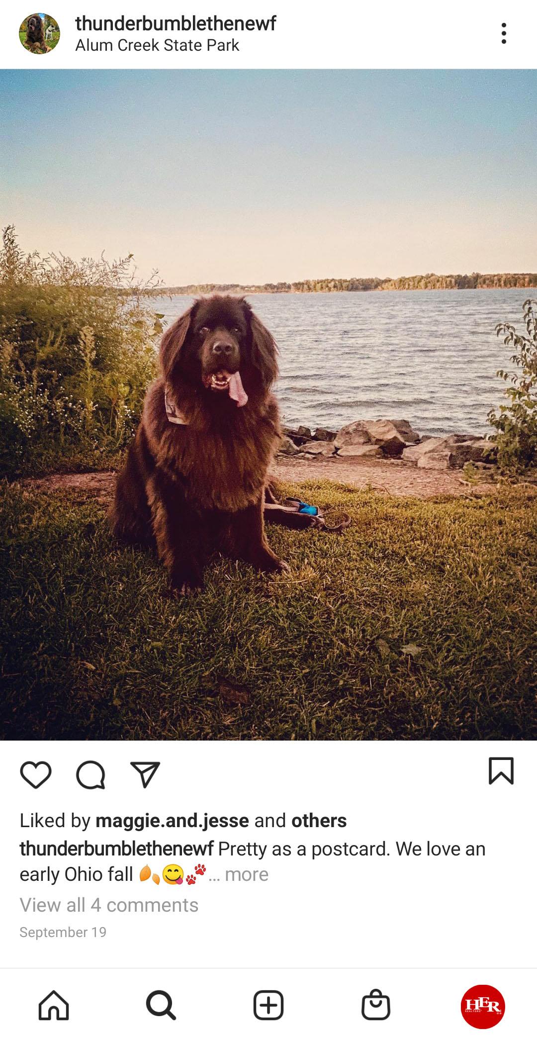 dog sitting at alum creek state