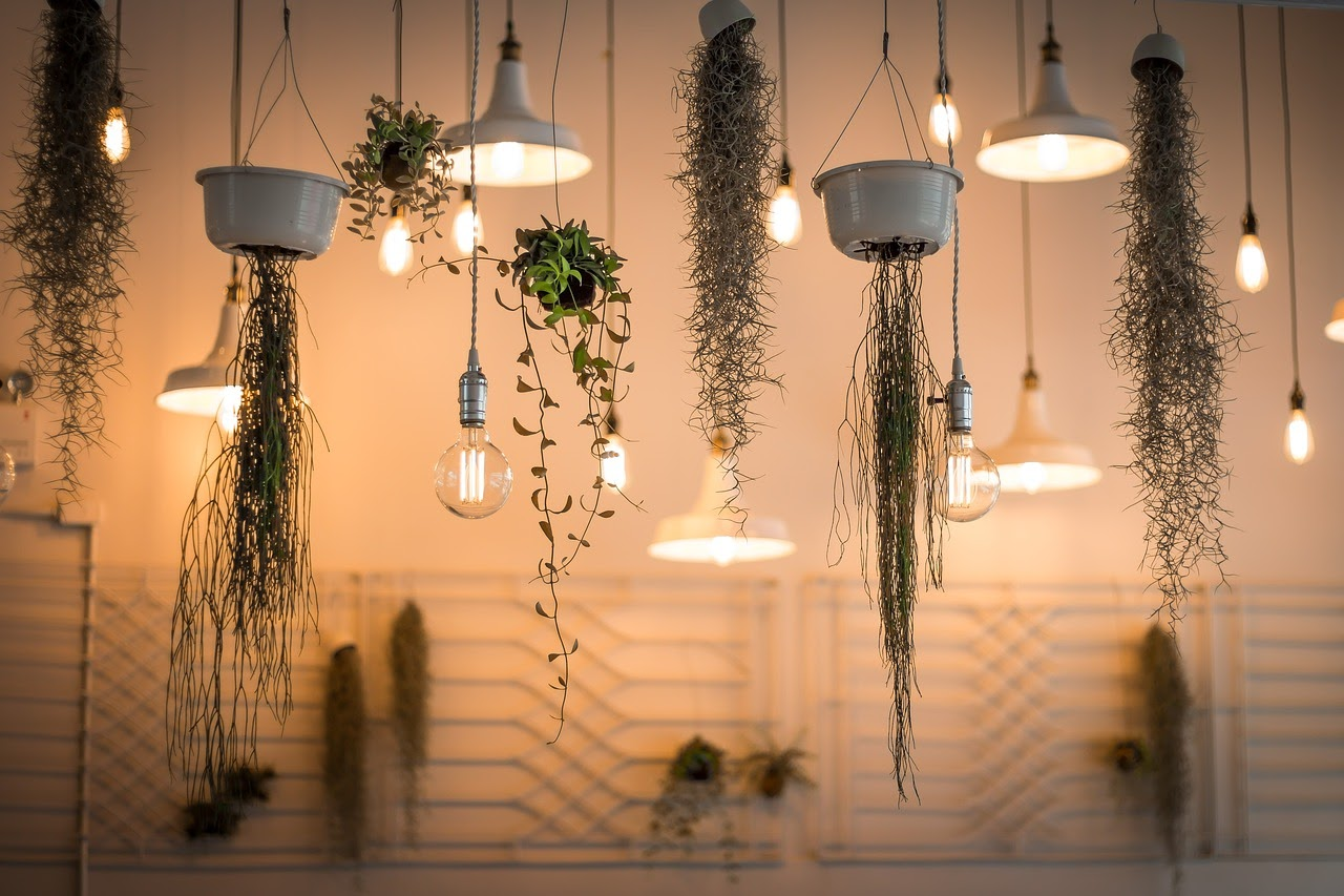 A variety of different houseplants hang from the ceiling in white pots.