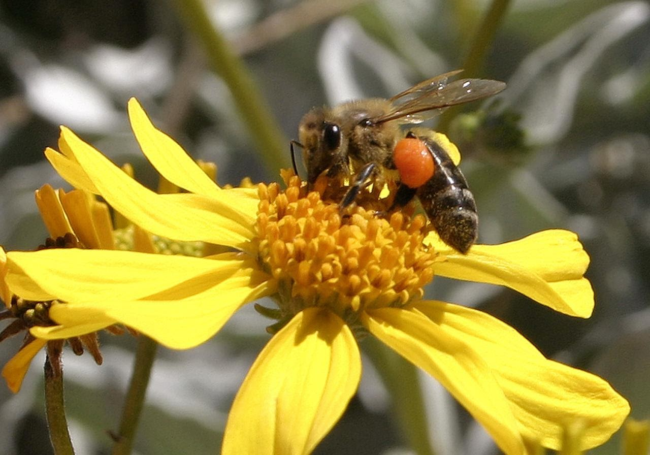 close-up of a bee on a yellow flower
