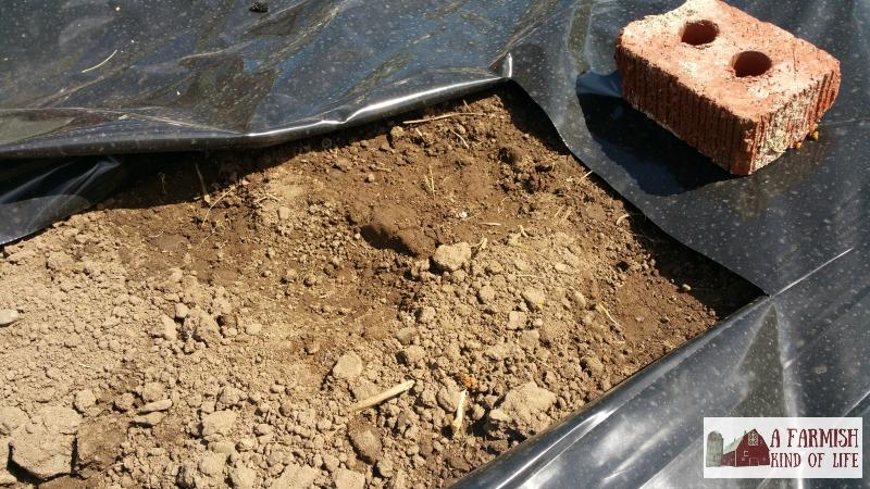 plastic mulch with a cut hole
