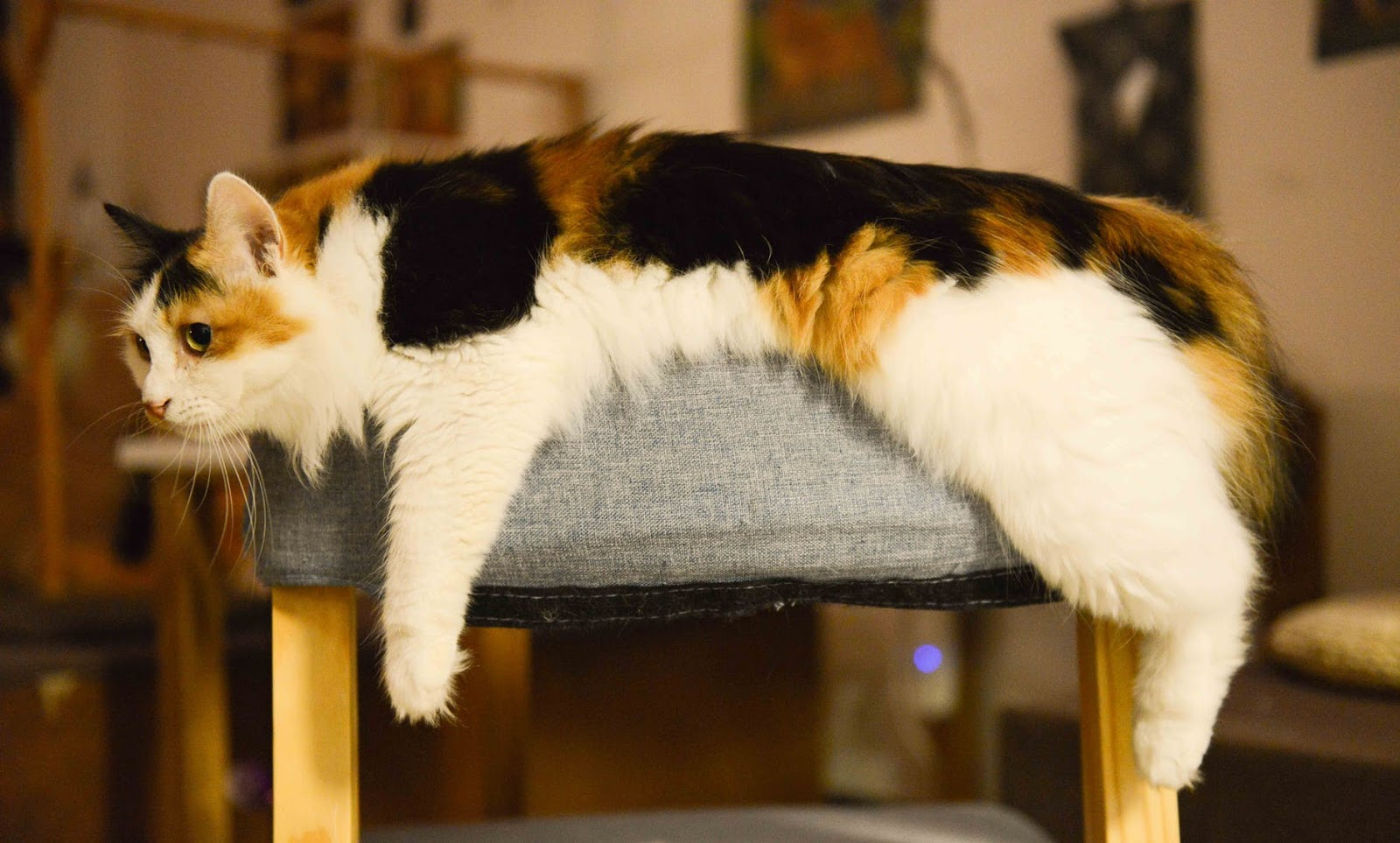 Calico cat resting on top of chair