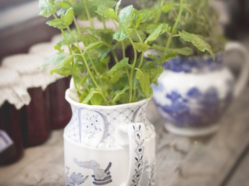 mint in small flower pot