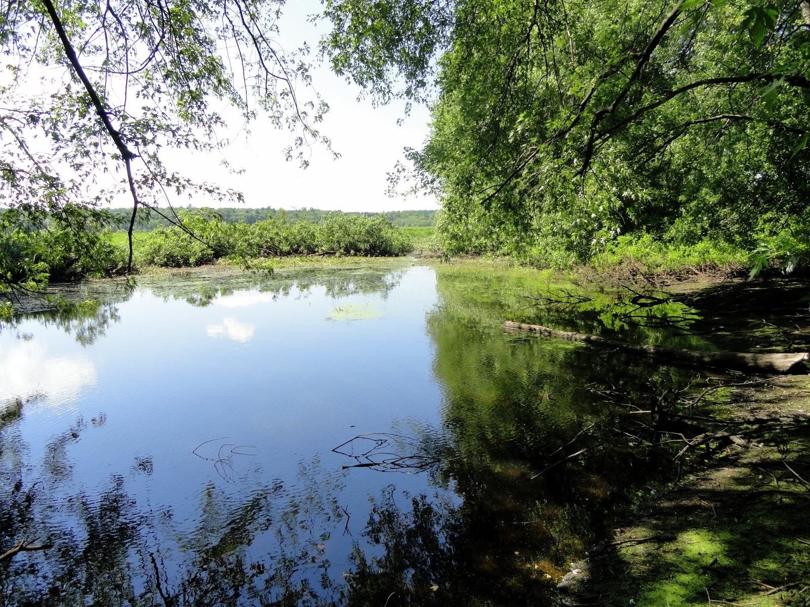 Sudbury_River_(Wayland_Massachusetts)_-_DSC00512.JPG