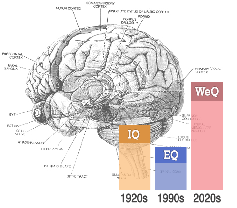 photo of brain IQ, EQ and WeQ
