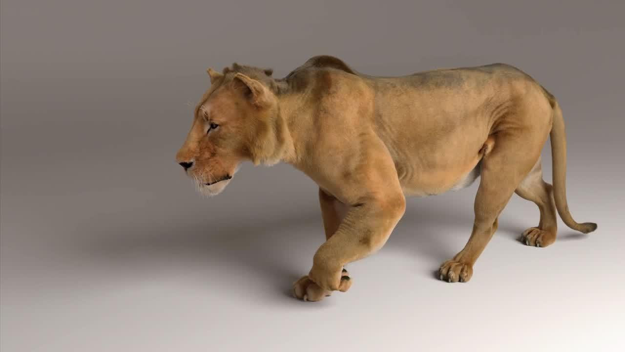 Zeke the Lion   Ziva Case Study