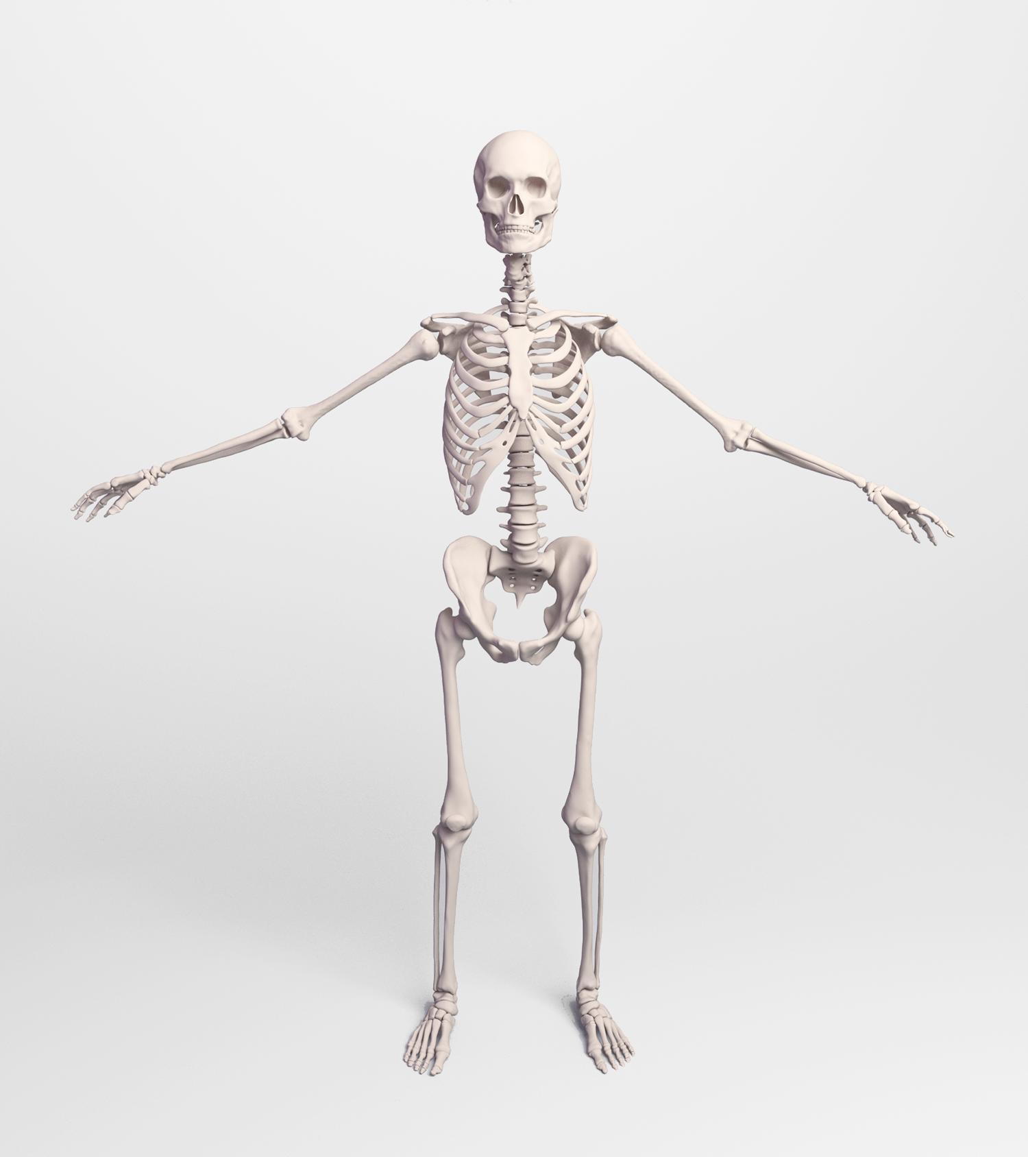 Simulation-Ready Characters | Ziva Dynamics