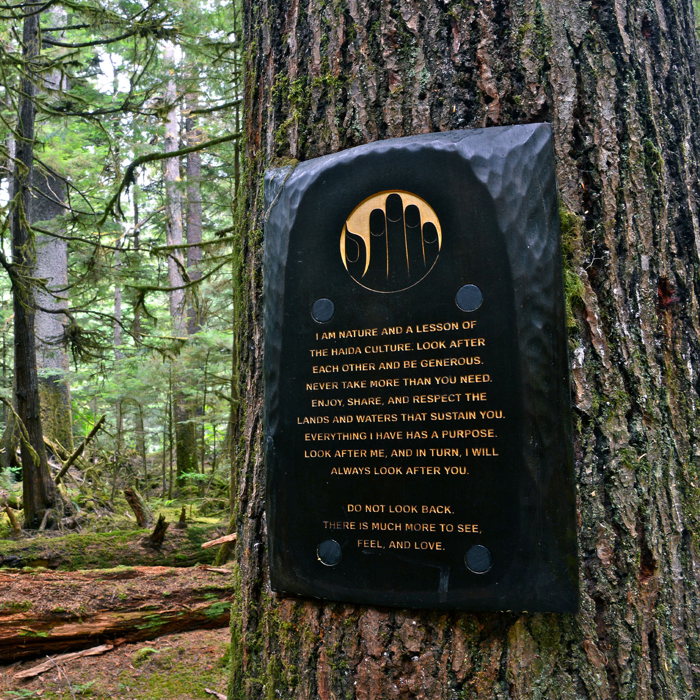 BC Parks Experiential signage design for the Golden Spruce Trail on Haida Gwaii by Flipside Creative.