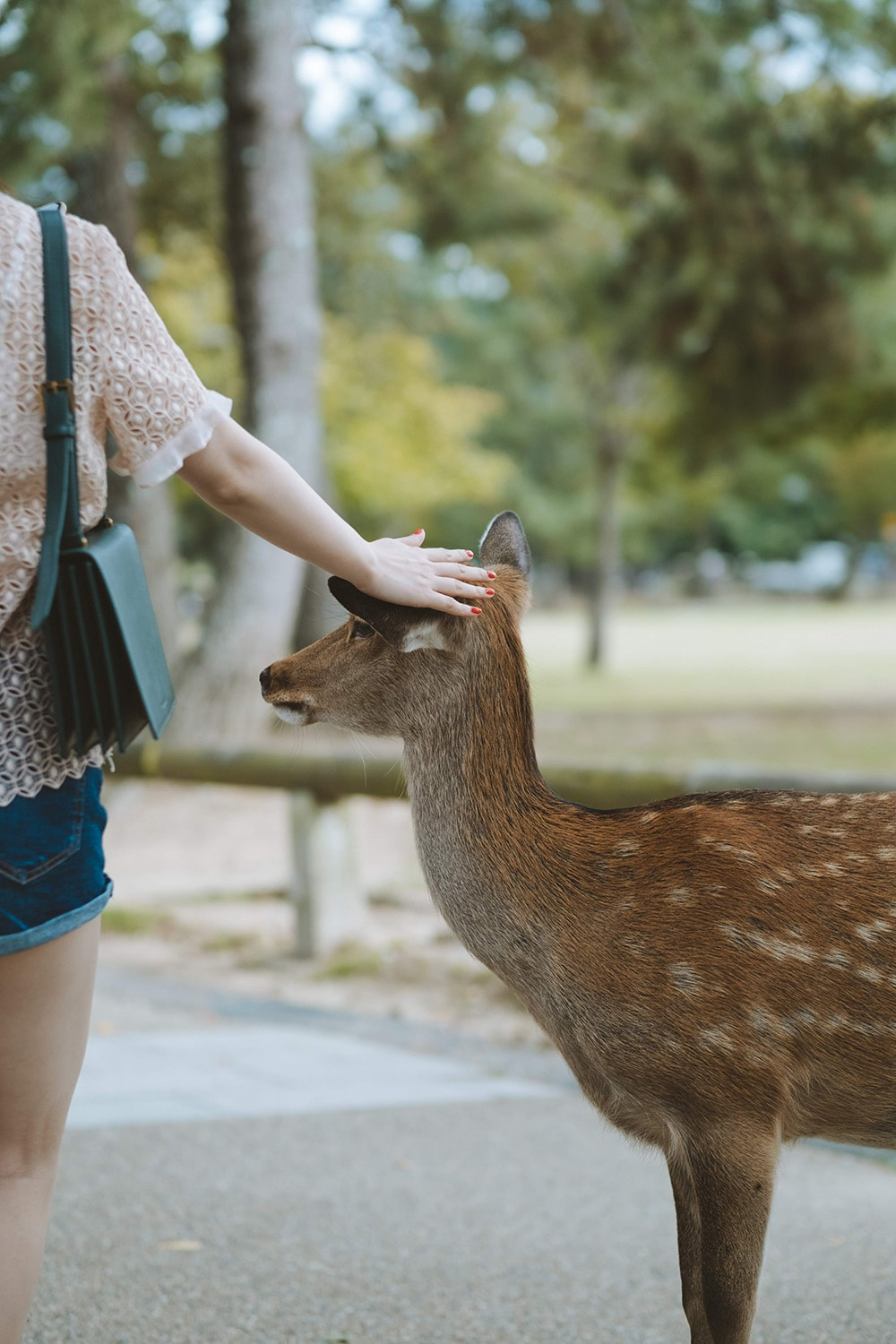 woman petting deer