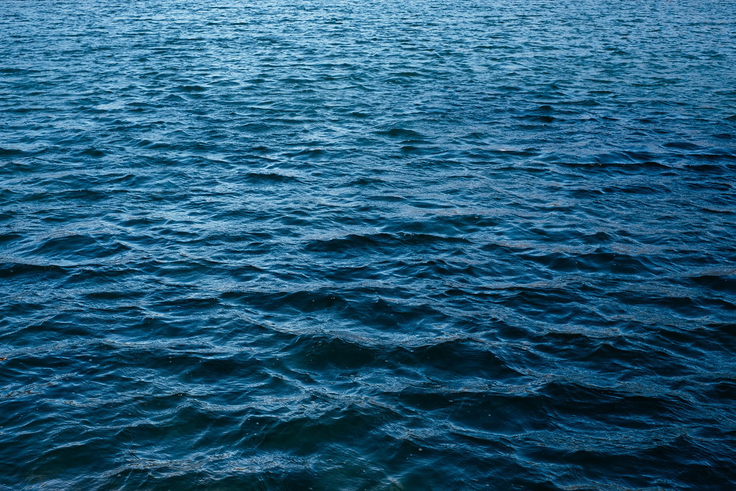 the surface of a lake