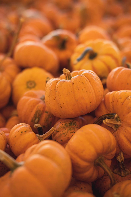 Small orange pumpkins