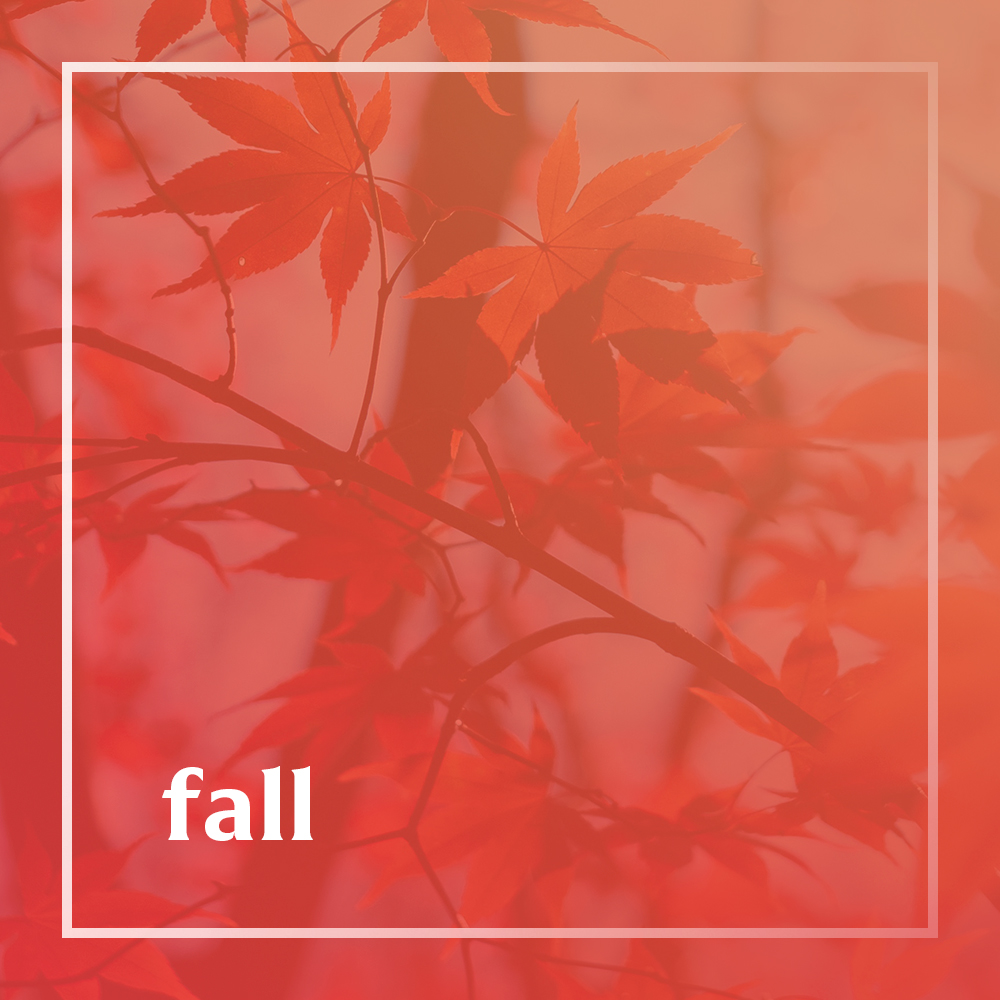 Fall playlist cover