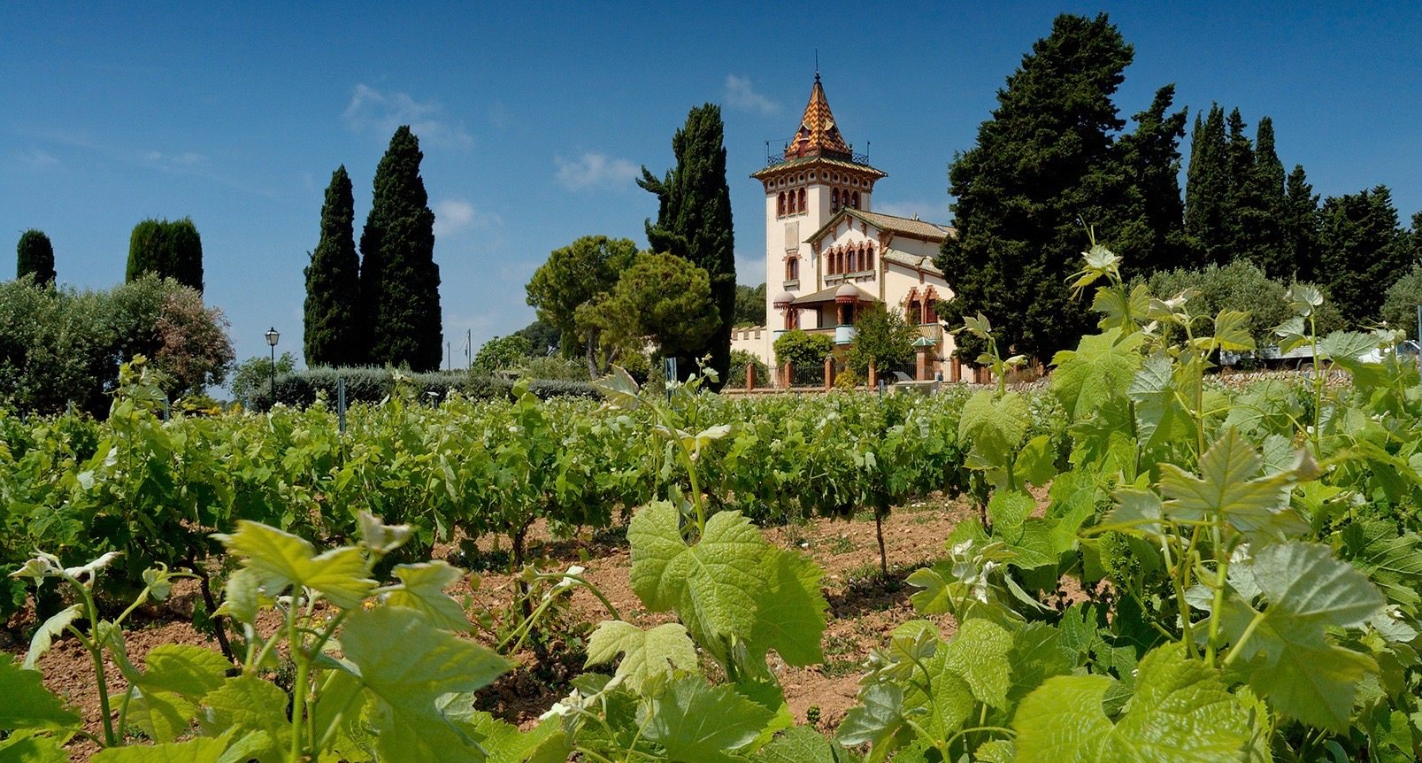 When thinking of Italy, one thinks of a typical Italian vineyard scene, with vines growing together with olive trees. All located in the countryside of Tuscany. Italy is world-renowned when it comes to wine-producing.