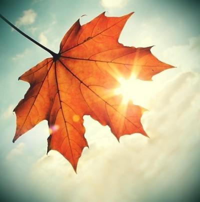 Høstens aktiviteter