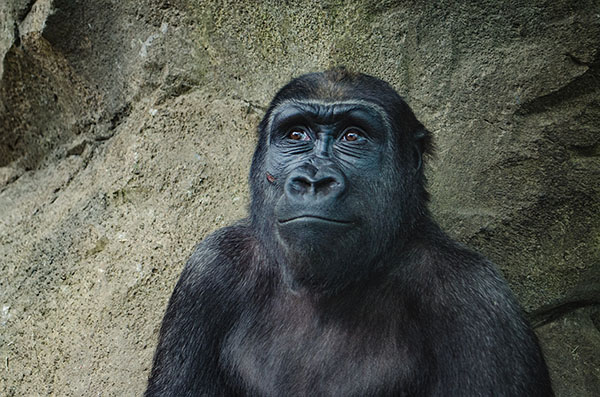 Why your users miss the 800-pound gorilla on your website