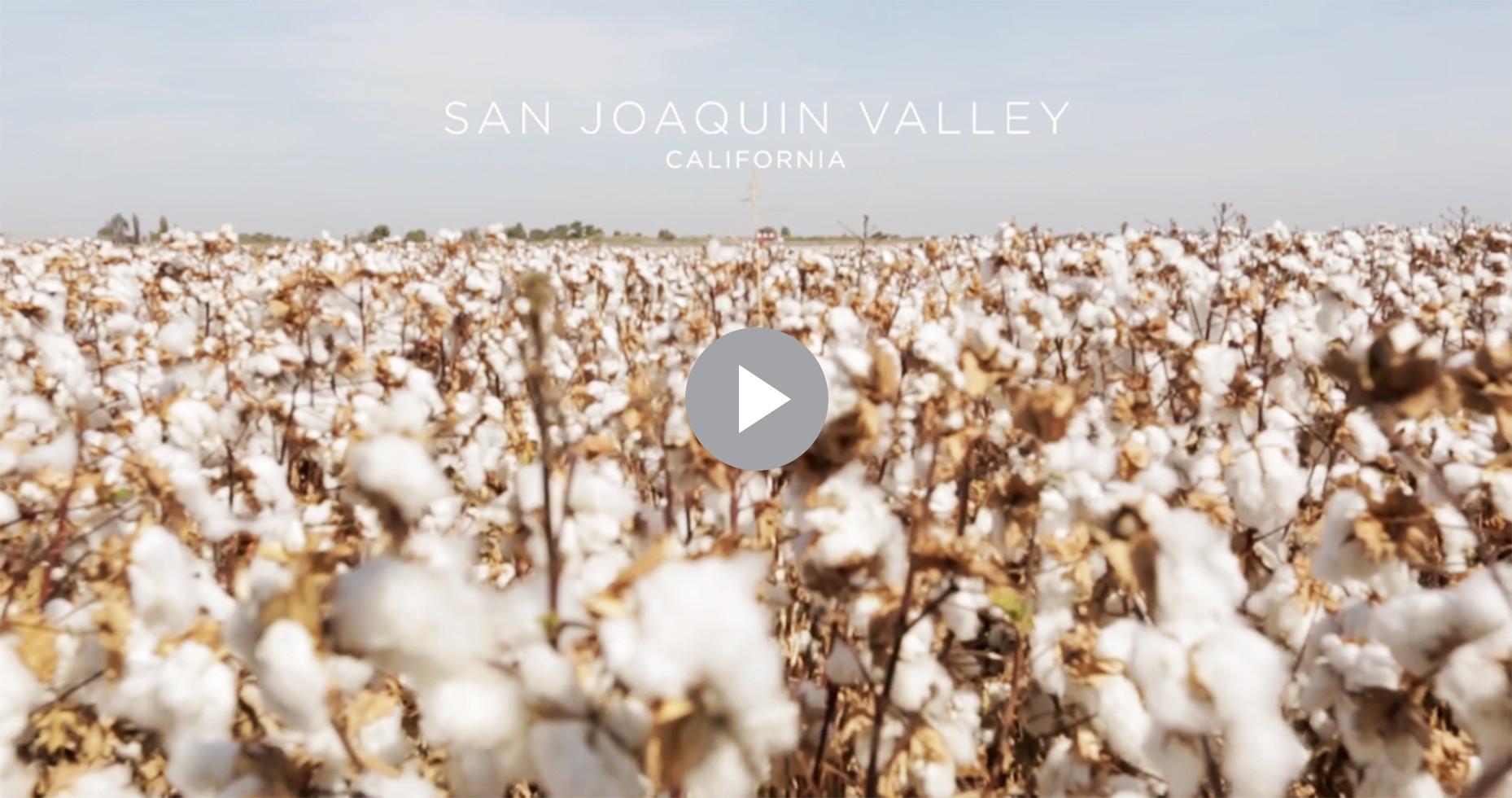 San Joaquin Valley Cotton Field