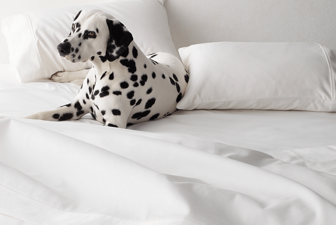 Dalmation on Wamsutta sheets