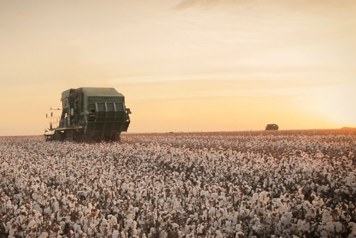 Tractor in cotton field