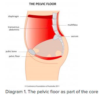 Pelvic Floor, Prenatal Health, Kegels, Postpartum Health