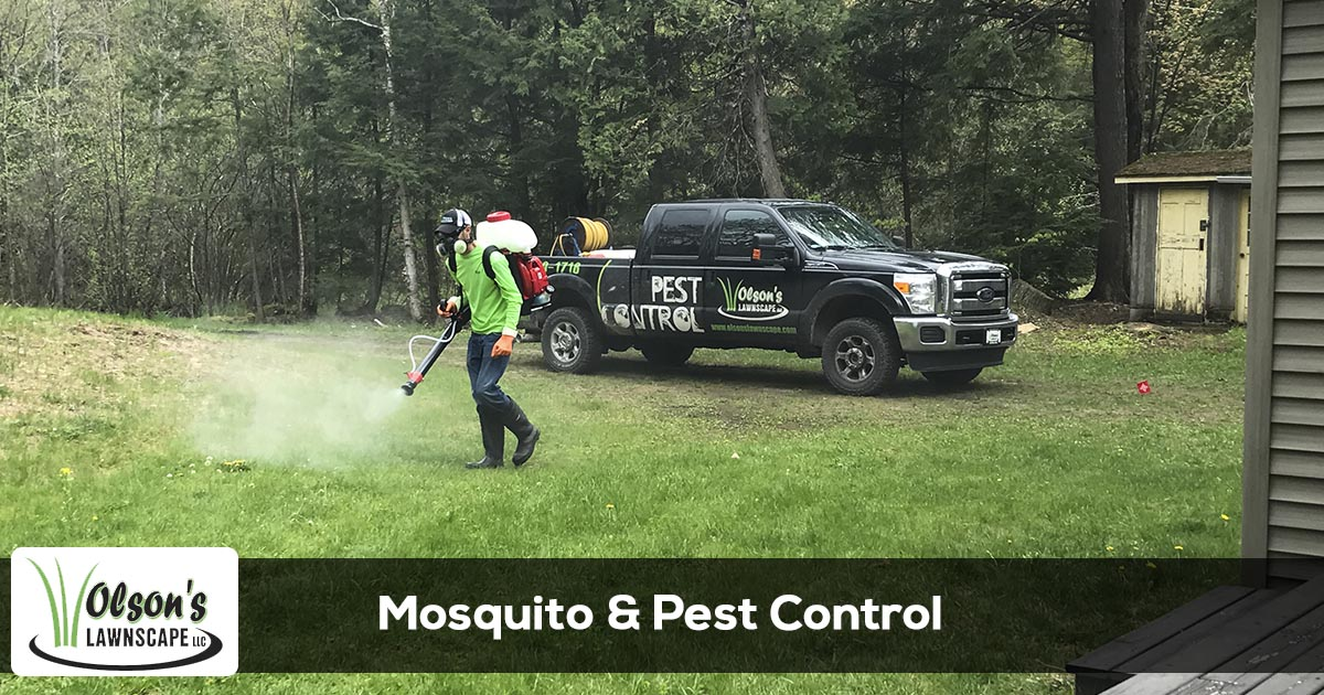 Pest & Mosquito Control Services From Olson's Lawnscape