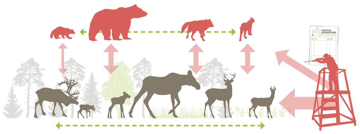 Hirvieläinten kantaan vaikuttavat tekijät-infograafi
