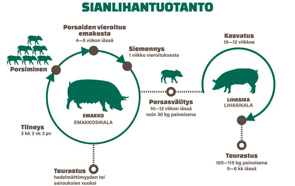 ianlihantuotanto Suomessa esitettynä kuvana