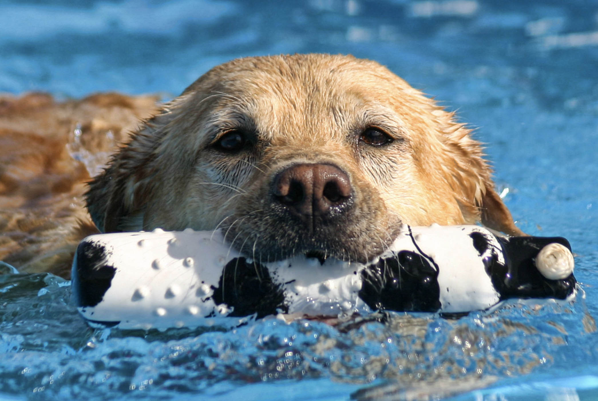 Swimming, margaritas/beer & pizza, and dog treats = Heaven. Plus your dog is welcome to play in the indoor park during the party!