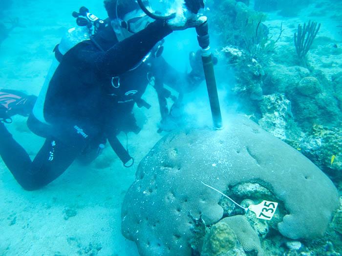 thomas-decarlo-coral-reef