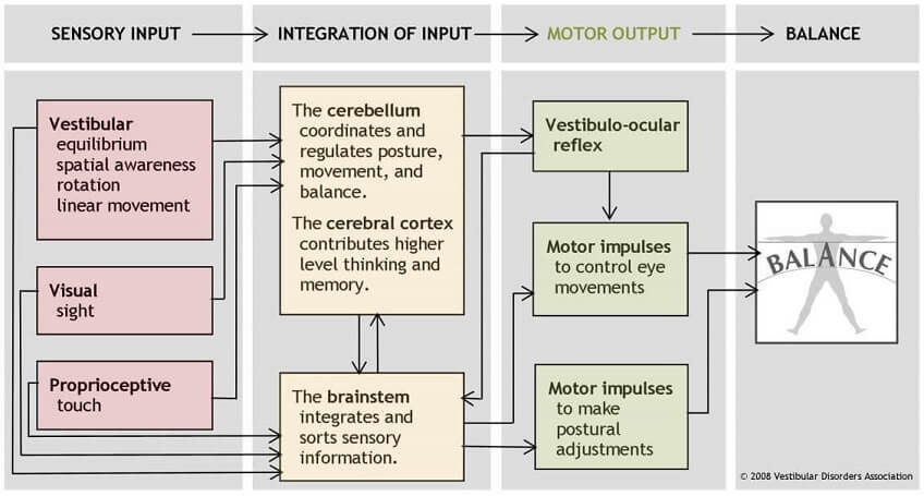 Sensory Input Balance