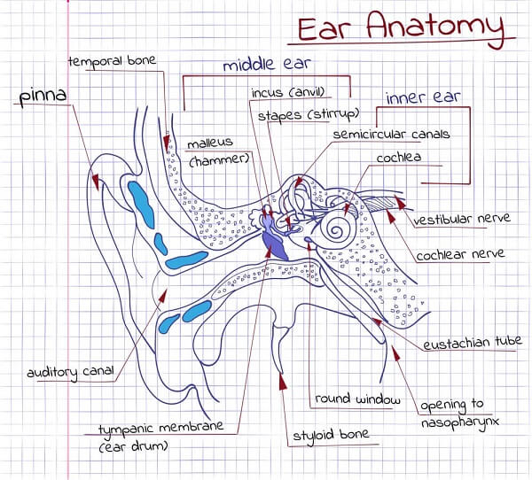 labyrinthitis inner ear anatomy