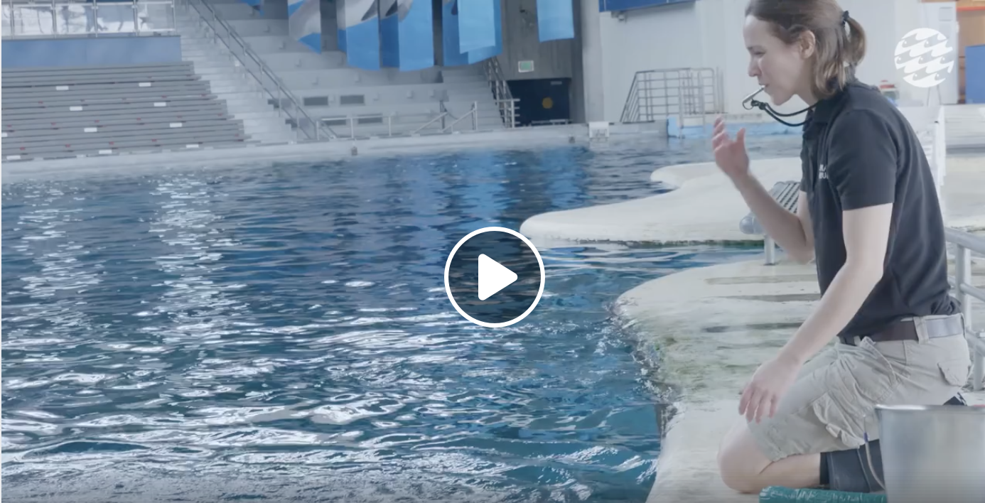 dolphin training video