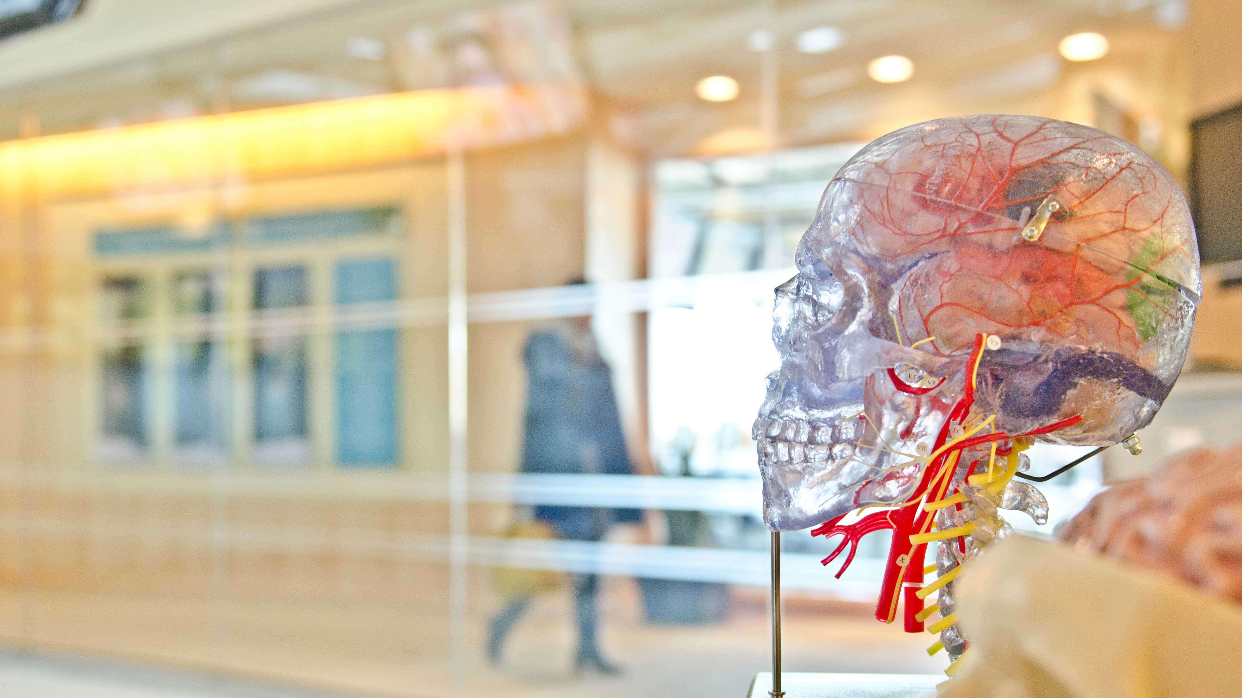 Esqueleto humano transparente com fios coloridos representando as veias.