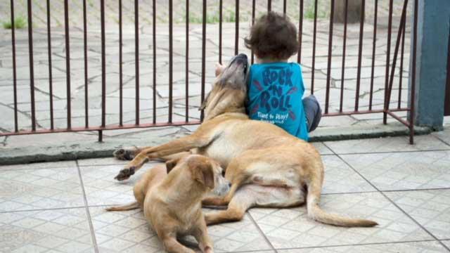 Cariança sentada no portão ao lado de dois cachorros.
