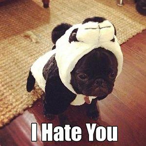 French Bulldog Meme #2