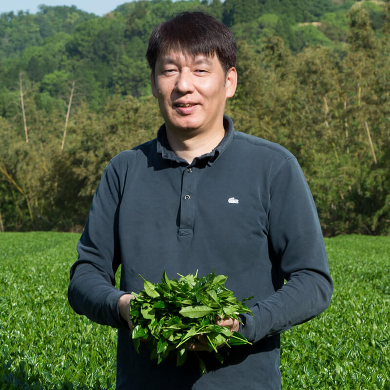 Matcha and Sencha producer in Yame Japan