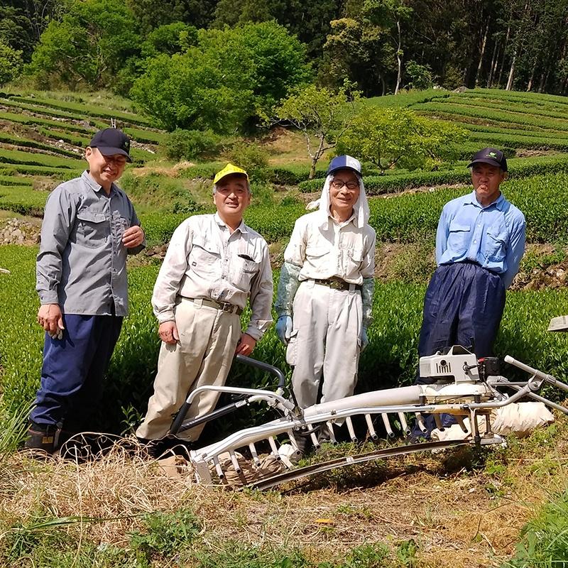 Matcha and Sencha producer in Yame Japan