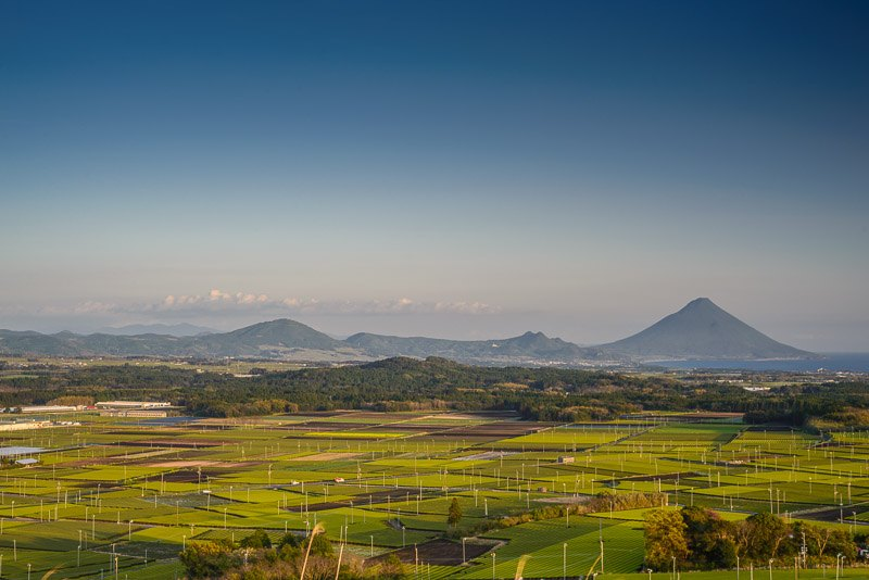 View of Chiran green tea fields and mountains, Kagoshima, Japan