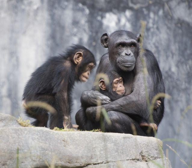 Affable apes live longer.
