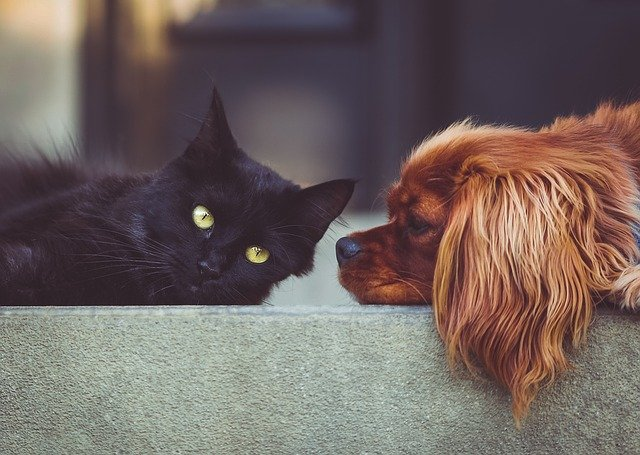 People favor canines over felines