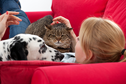 Pet Dander is a major trigger of allergies and chronic sinusitis problems