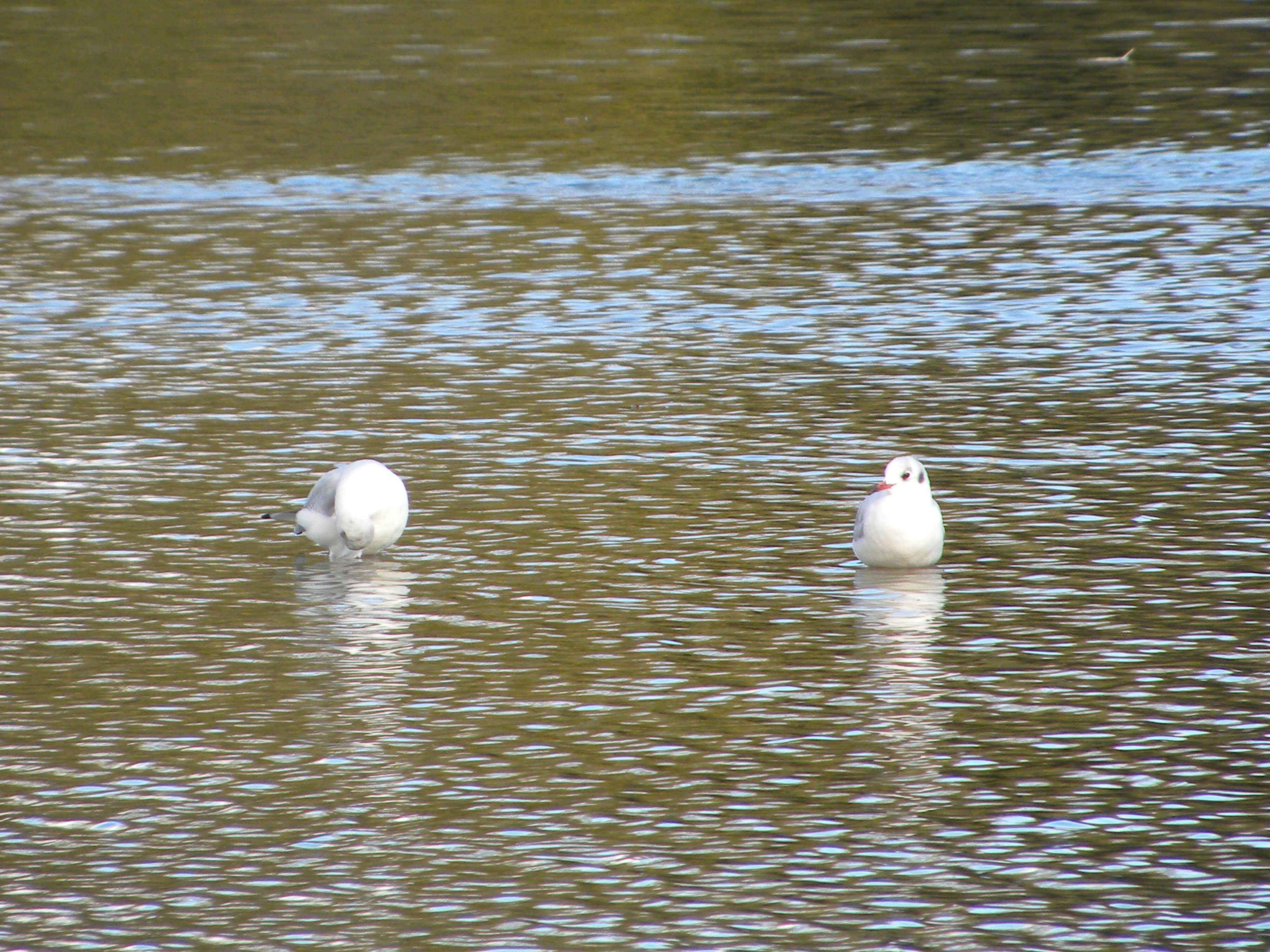 Waterlilly Lodge - Little Horseshoe Lake