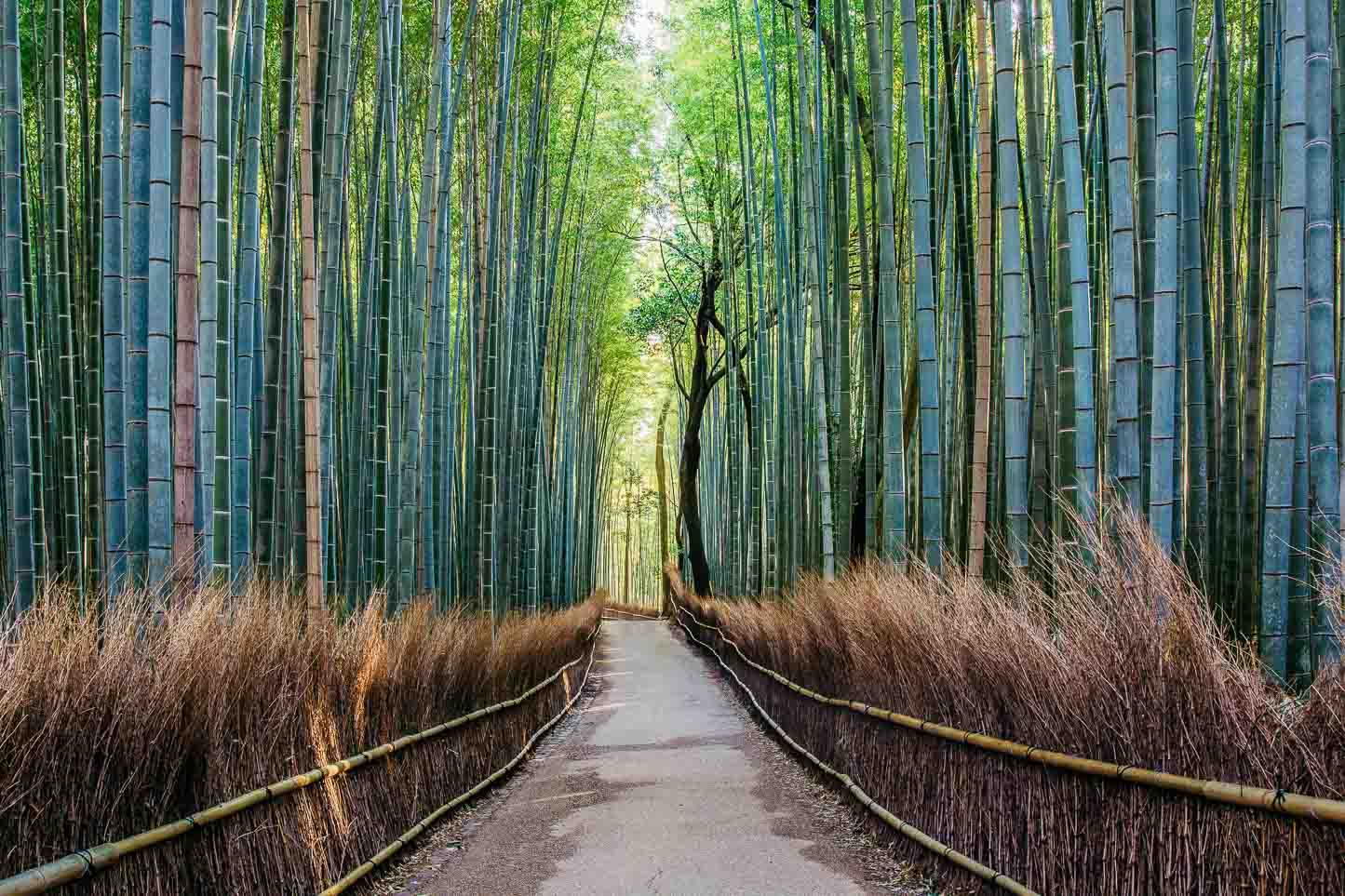 Ein Weg durch den Bambusgarten in Japan.