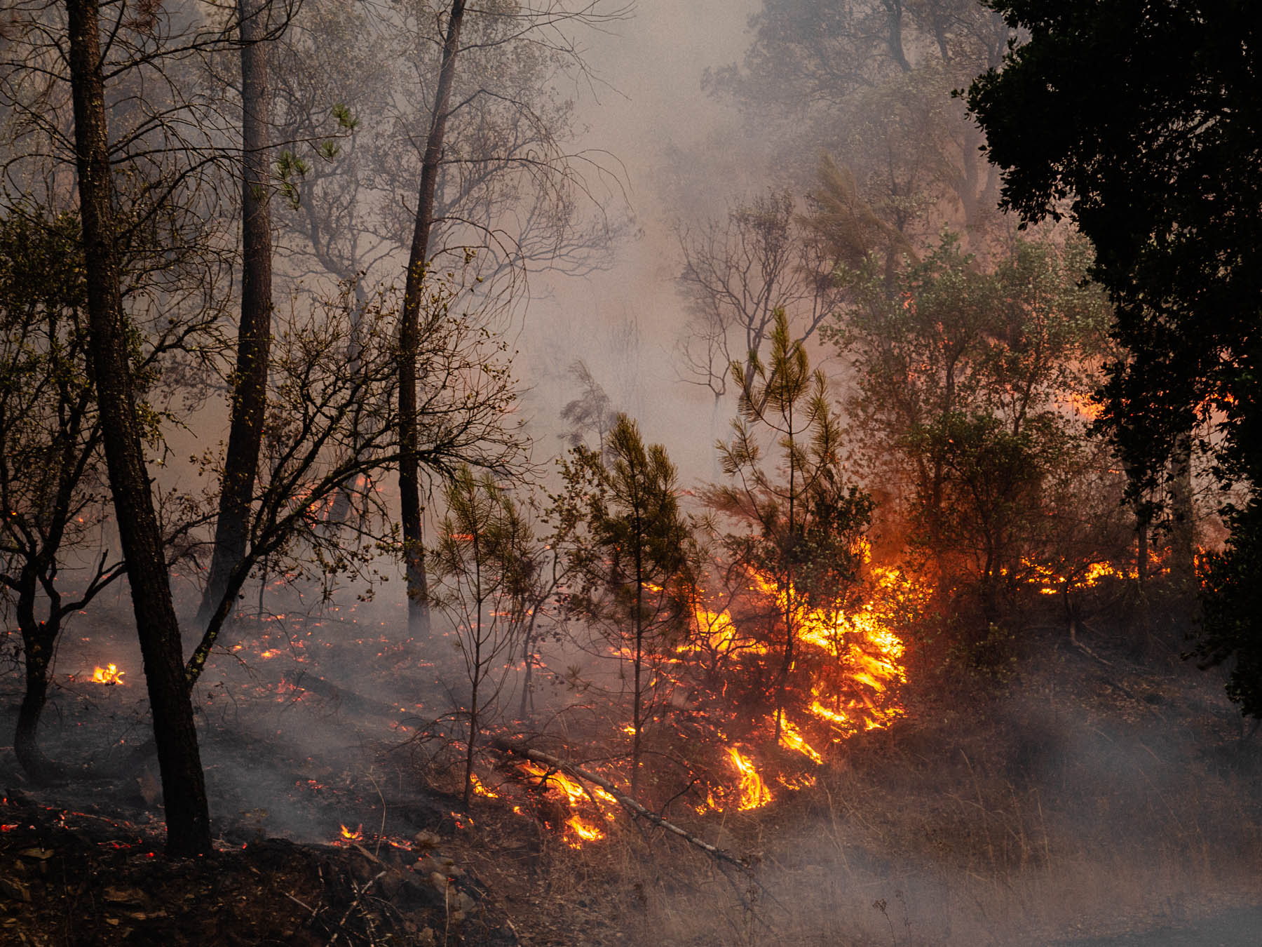 forest, fire, portugal, reportage, wild, photography