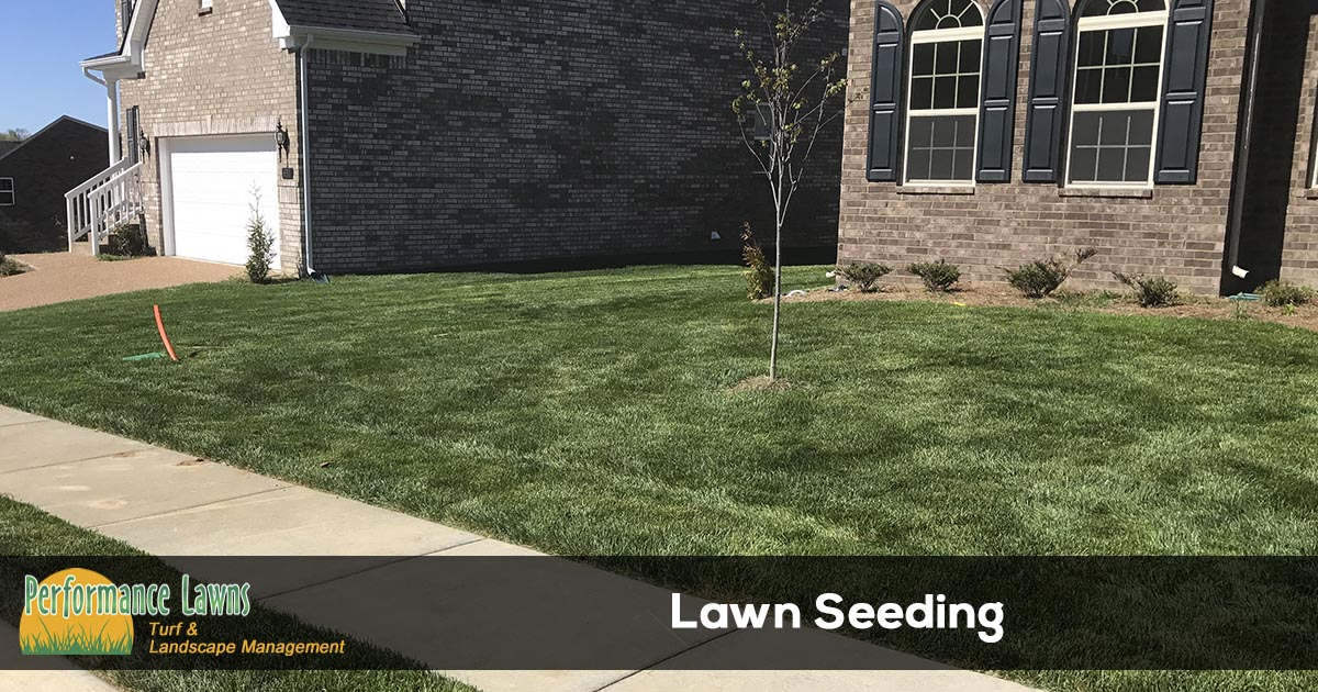 Lawn seeding services