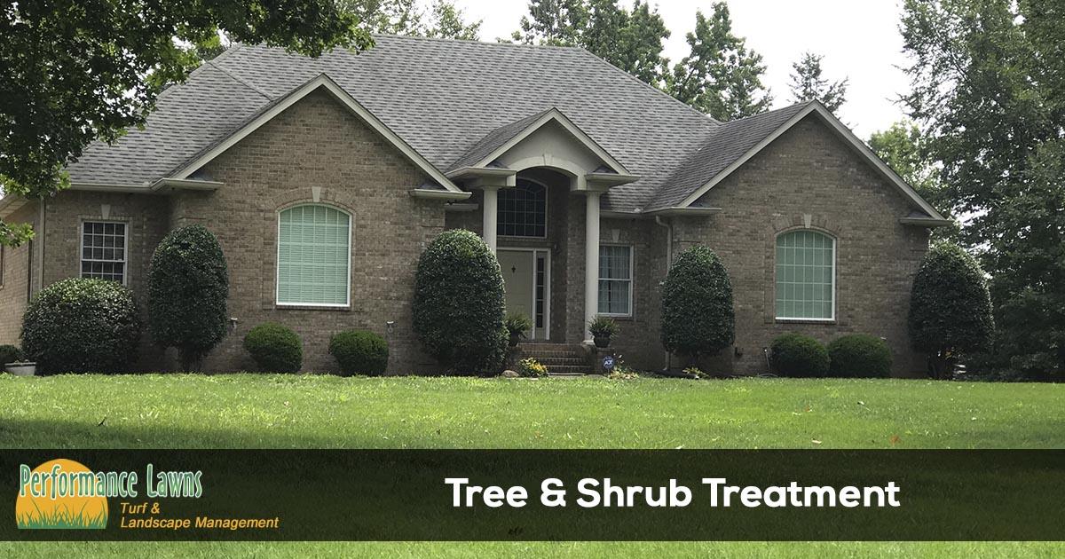 Spraying trees and shrubs